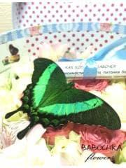 "бабочка в коробке с цветами ""палинур"""